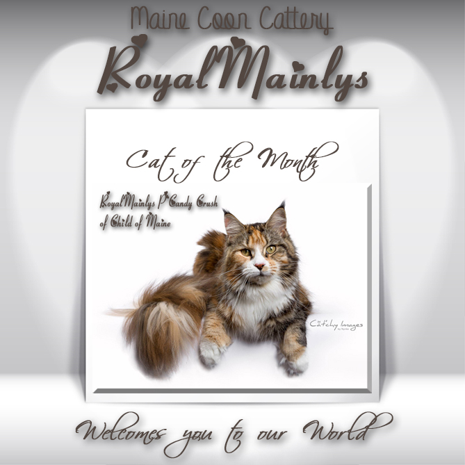 Maine Coon Cattery RoyalMainlys